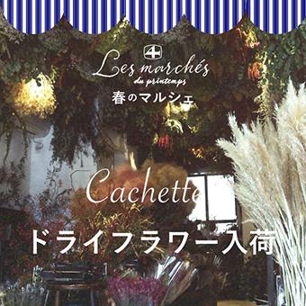 2/12(水)~なくなり次第終了<br>『春のマルシェ Cachette ドライフラワー入荷』